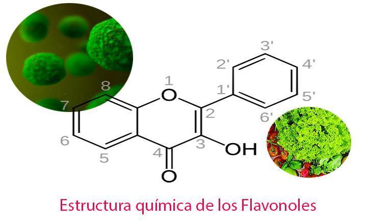 Comer alimentos ricos en flavanol puede prevenir enfermedades cardíacas