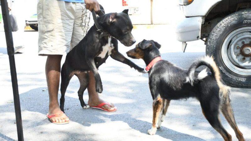 Ministerio de Salud anuncia jornada nacional de vacunación antirrábica de perros y gatos