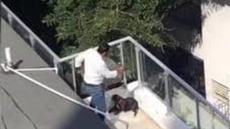 Multa de 300 mil pesos y trabajo comunitario para el agresor de la perrita Truffa