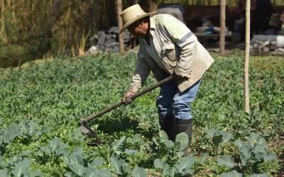 Agricultor encuentra granada de mortero sin explotar en cañada de Santiago Rodríguez