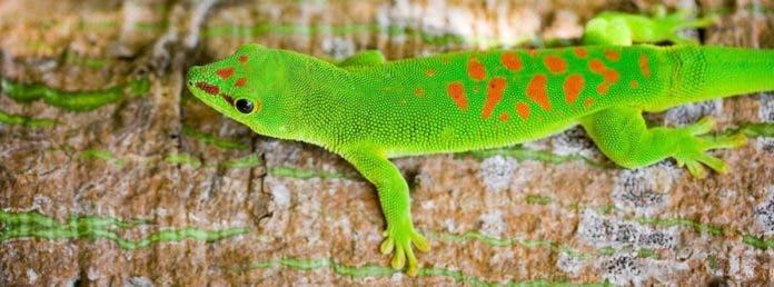 Lo que necesitas saber del Día Internacional de la Diversidad Biológica