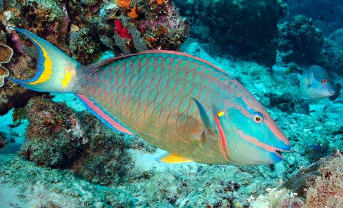 Decreto: Estas son las 13 especies de peces que no se pueden capturar en RD