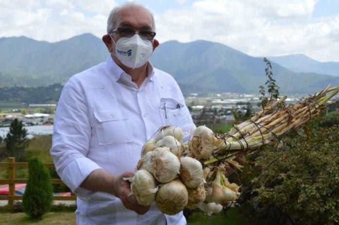 Con inversión de RD$144 millones a tasa cero del Bagrícola, cosecheros de ajo dan un nuevo impulso a la siembra